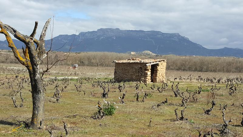 Santalba's old bush vines and shelter in Rioja