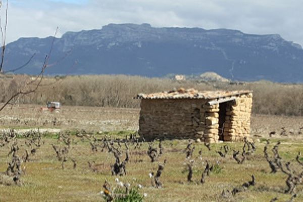 2017 harvest update from Rioja....