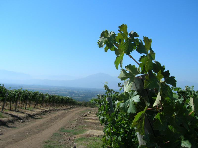 Cantaluna vineyards with Andes in the distance